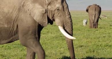 wildlife tanzania italy flights