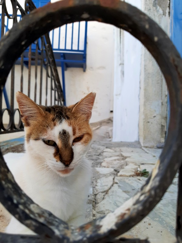 cats of greece