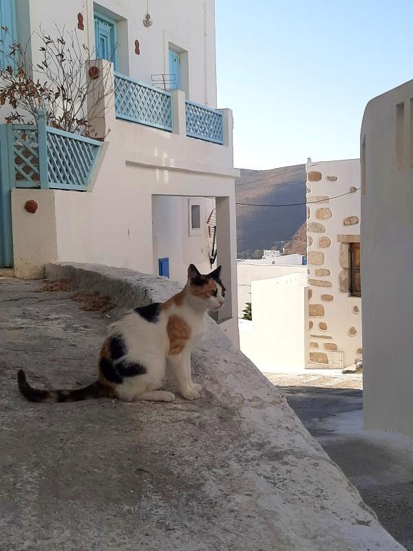 cat astypalea