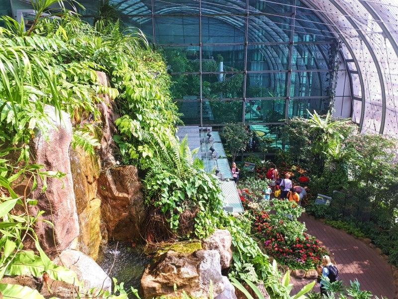 butterfly garden singapore airport terminal 3