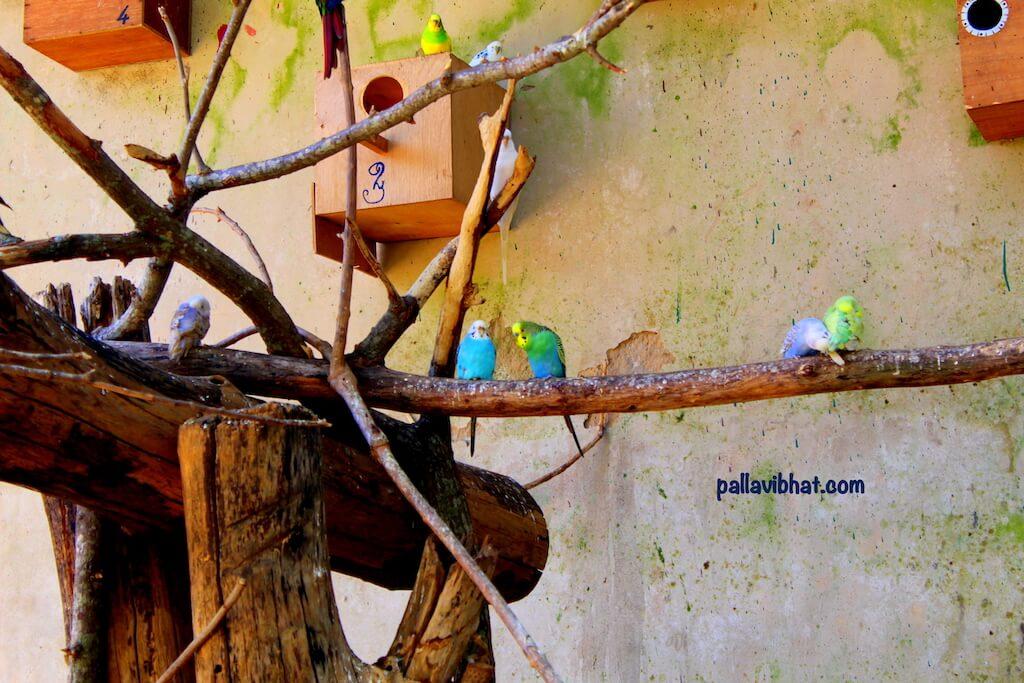 Aviary-birds