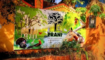 Prani-The Pet Sanctuary