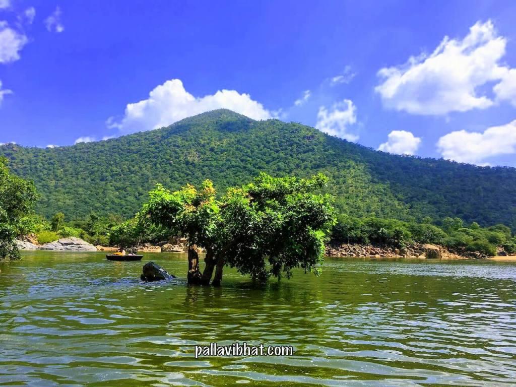 Submerged Tree in Kaveri River