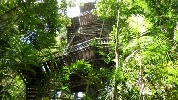 Daintree Discovery Centre Tower