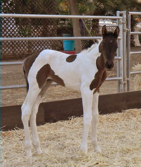 sophie filly 3 days