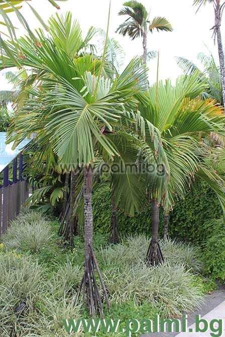 Zone 5 Water Plants