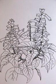 Salvia roja.14,8x21cm.
