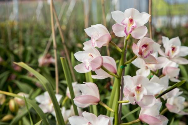 The Flower Fields-52