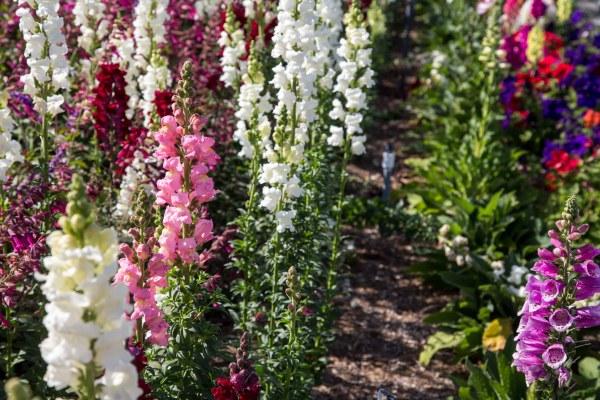 The Flower Fields-55