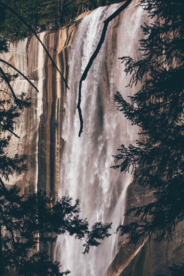 Yosemite | Palms to Pines