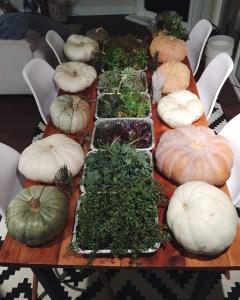 Succulent Pumpkins | Thanksgiving Centerpiece Idea-25