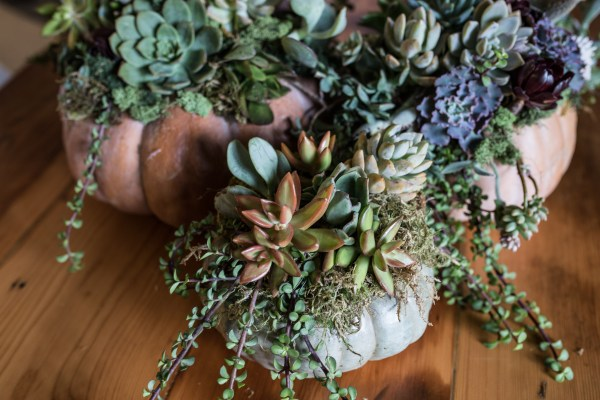 Succulent Pumpkins | Thanksgiving Centerpiece Idea-1