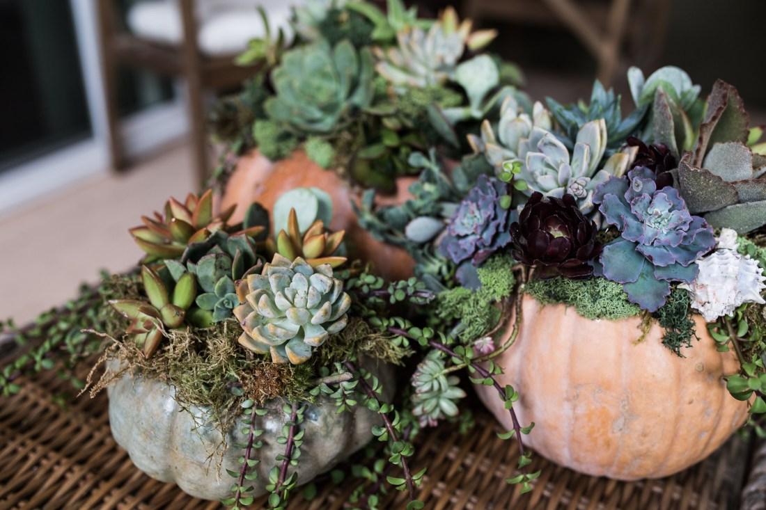 Succulents and Pumpkin thanksgiving day centerpiece