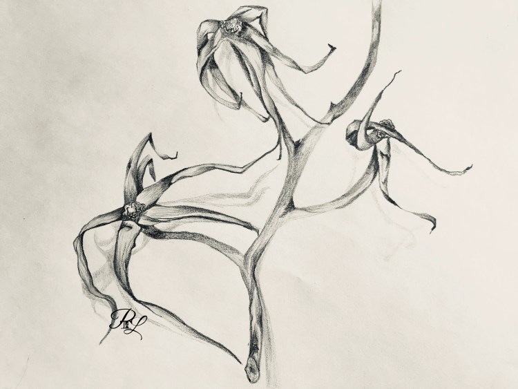 look at my sketch of this tomato vine.
