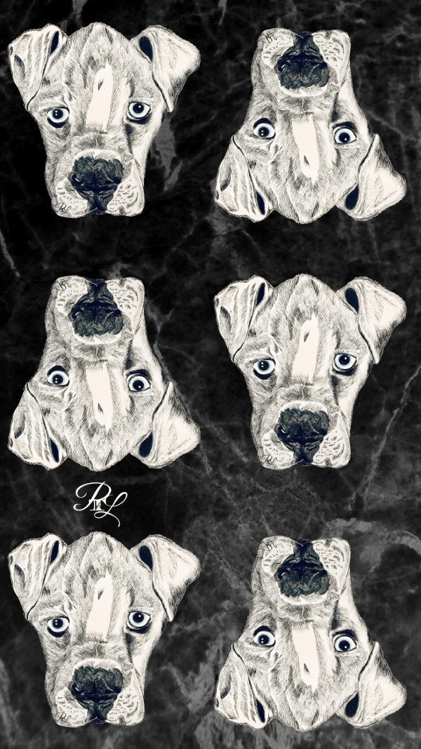 Buy this Boxer puppy phone wallpaper.