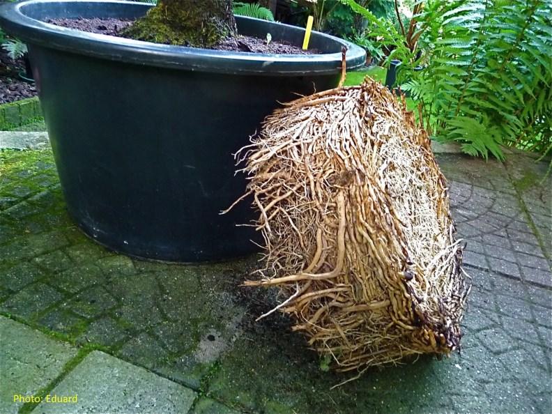 Peut On Planter Un Palmier Prs Dune Piscine Systme