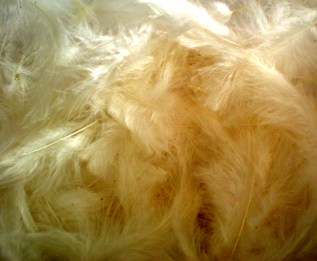 feather_stock___pale_yellow_by_rockgem