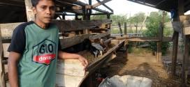 Merintis Peternakan, Kurangi Pengangguran Usai Bencana  (Bagian 1)