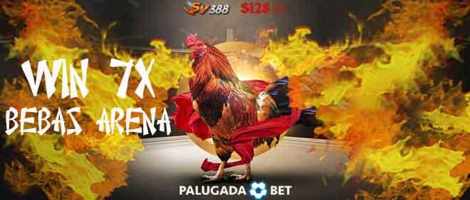 banner-sabung-ayam-7x-win-palugadabet-mar18