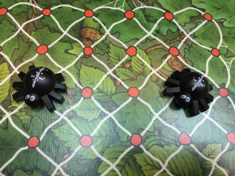 在二樓圖板上表面的兩隻蜘蛛