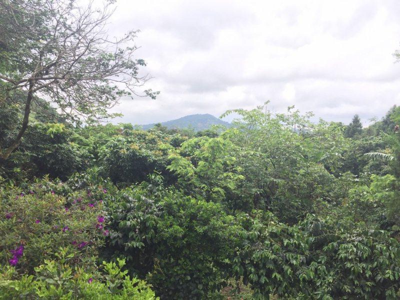 雨中的山景,最高!