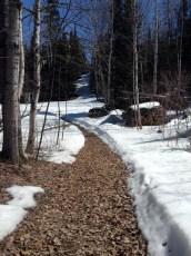 Trail IN