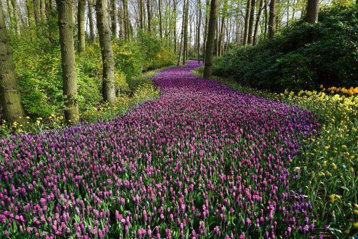 beautiful-bloom-blooming-414083 (1)