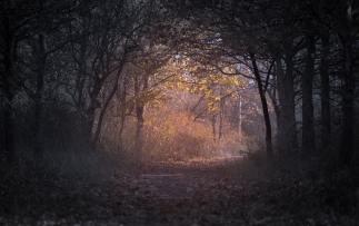 autumn-backlit-branch-226721
