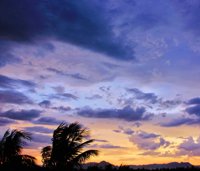 clouds-coconut-trees-dark-765174