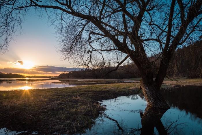 barren-branches-calm-355905