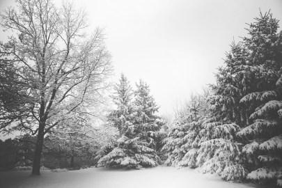 branches-landscape-snow-4620