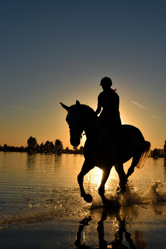 backlit-beach-cavalry-210237