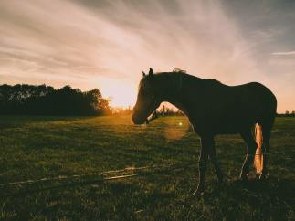 silhouette-photography-of-horse-1203309