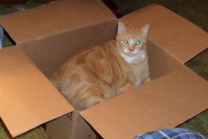 catsbutterbox