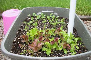 garden05202-salad
