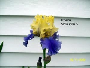 Edith Wolford