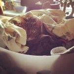 Romeo the cat in the laundry basket.