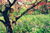 Isabel in a peach tree (Beijing Botanical Gardens)