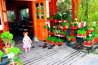 Plants for sale at Purple Bamboo