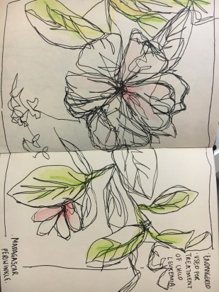 This drawing was done using a continuous line style. By doing this, it enhances my awareness for observational drawing. By adding colour I attempted to suggest the colour of the flowers without saturating the whole image.