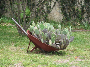 Container planting, Texas-style (Welfare, TX)