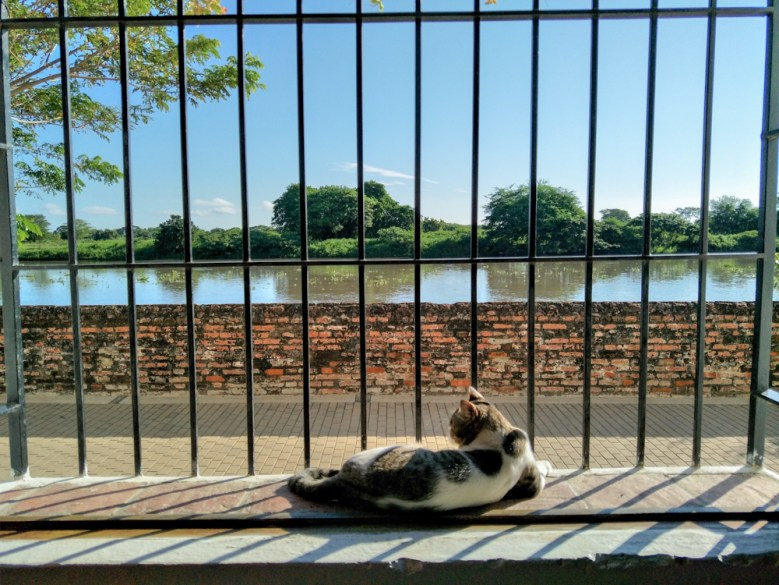 Cat in Mompox