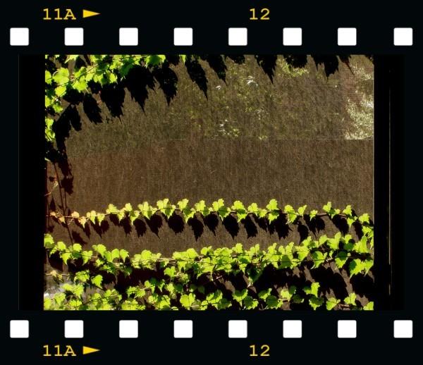 Frame2459762