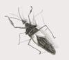 Bug_4