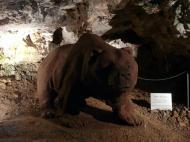 Važecká jaskyňa - expozícia jaskynných medveďov