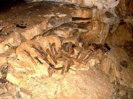 Kosti jaskynného medveďa vo Važeckej jaskyni