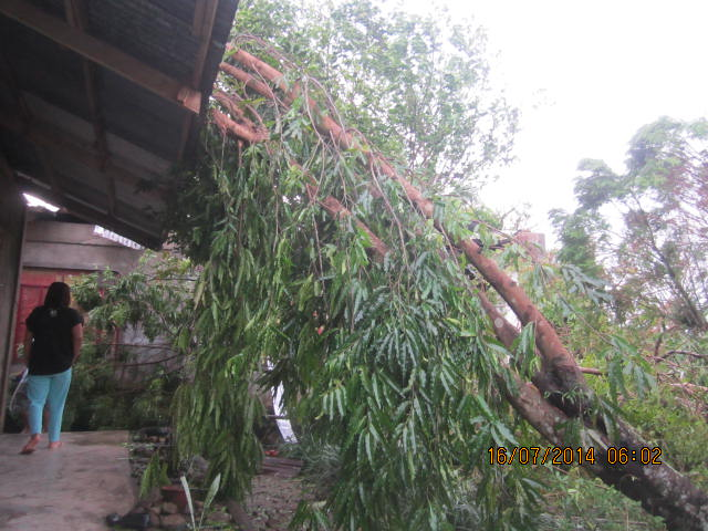 trees laying on roof of dormitories