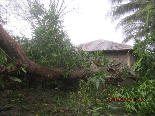downed trees by water pump