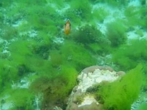 Philippines Mar2013 MikeB 1346