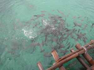Philippines Mar2013 MikeB 1413